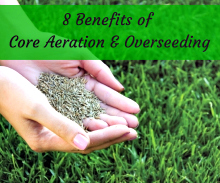 8 Benefits of Aeration